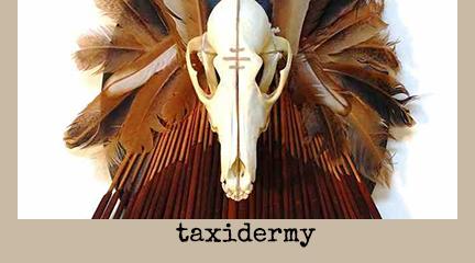 taxidermy