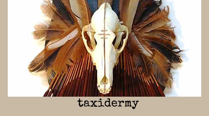 taxidermy and other oddities